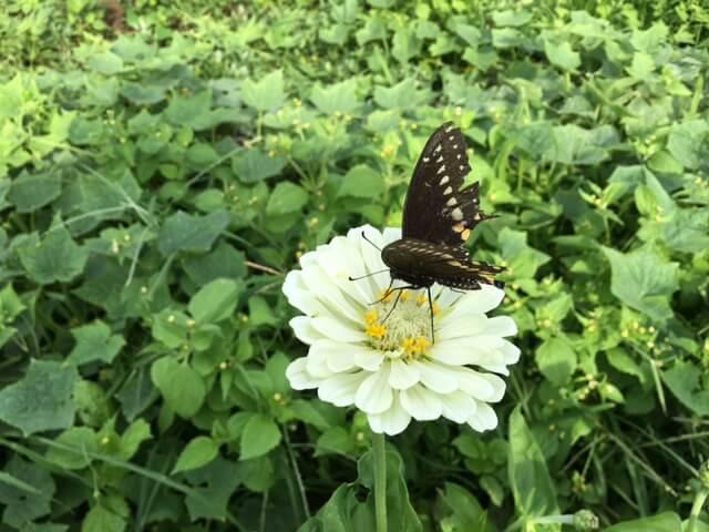 Butterfly_2017