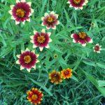 Organic Flower Farm (10)