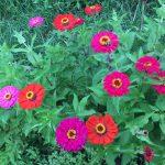 Organic Flower Farm (14)