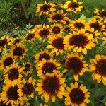 Organic Flower Farm (2)