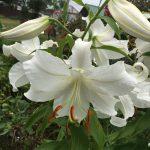 Organic Flower Farm (5)