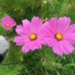 Organic Flower Farm (8)